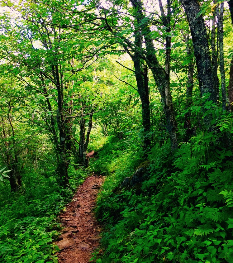 Art Loeb Spur - woods