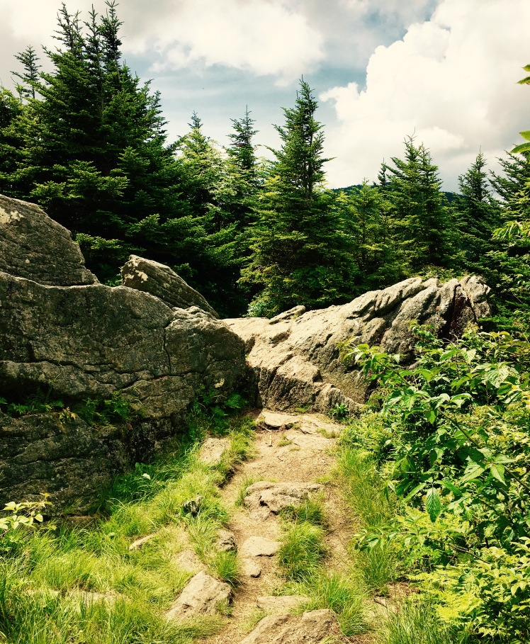 Black Mountain Crest Trail - path