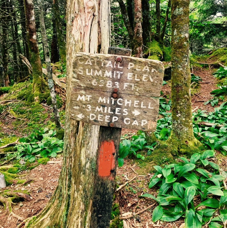 Cattail Peak - false summit