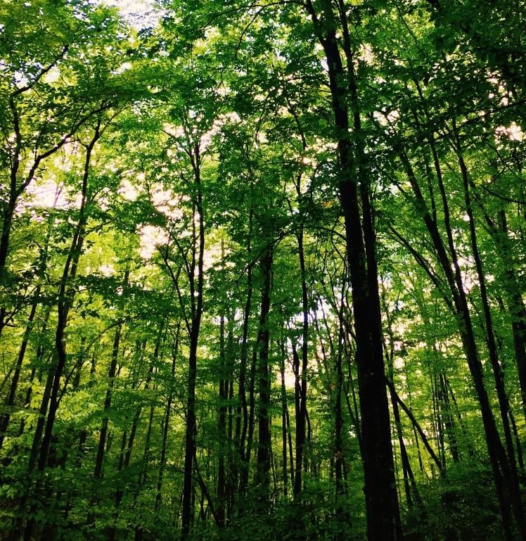 Bartram Trail - Trees