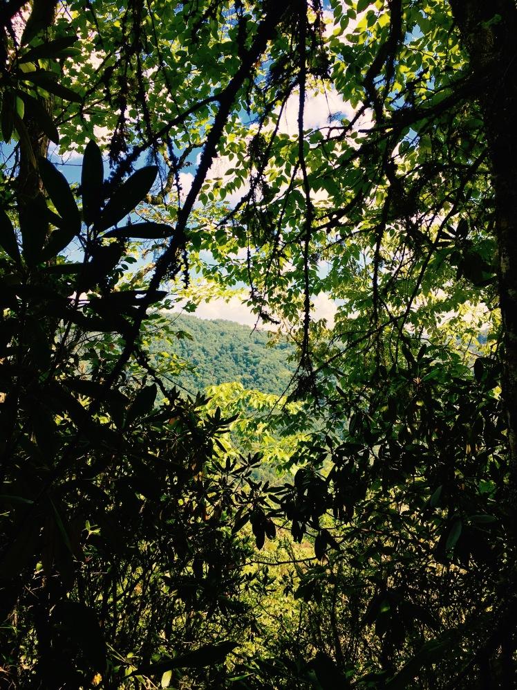 Bartram Trail - view