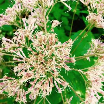 F.S. 5031 - flowers