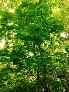 F.S. 5031 - foliage