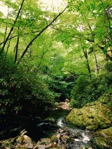 Haywood Gap Trail