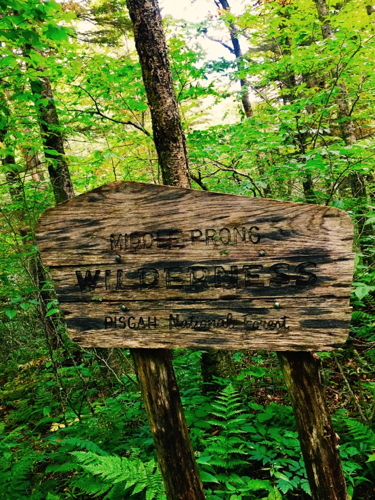 Haywood Gap Trail - boundary marker