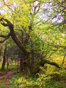 Appalachian Trail - fall