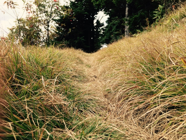 Black Mountain Crest Trail - grass