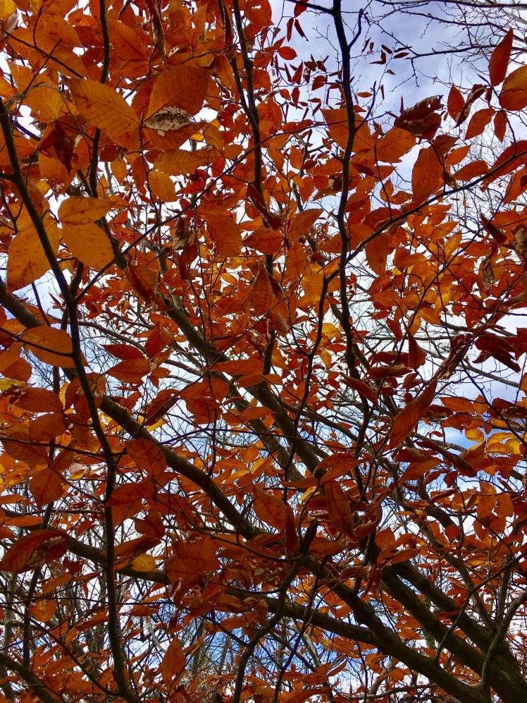 Ivestor Gap Trail - fall foliage