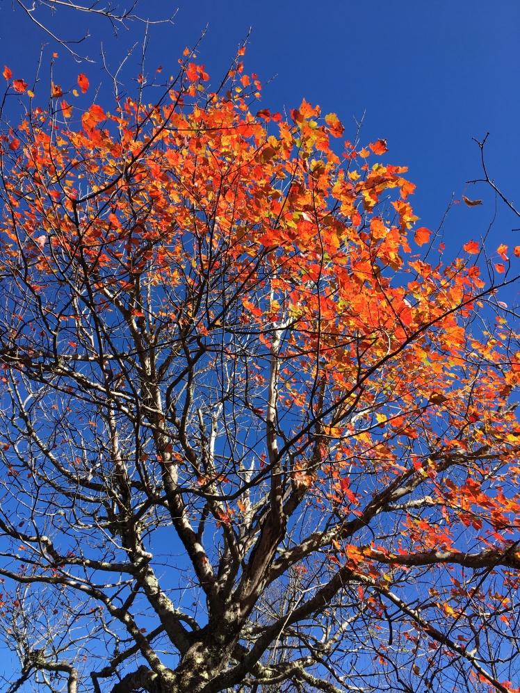 MST - fall foliage