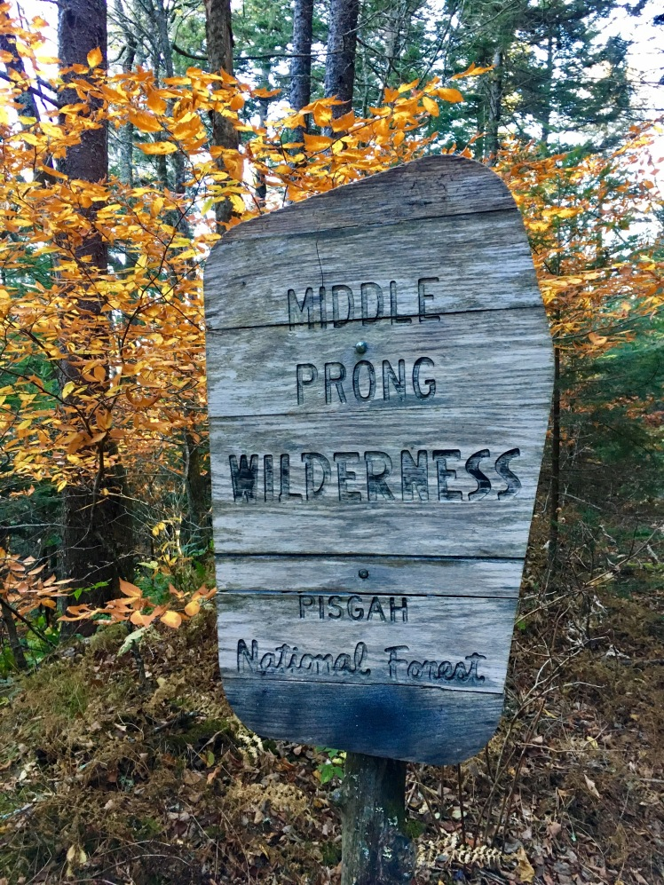 MST - Middle Prong Wilderness
