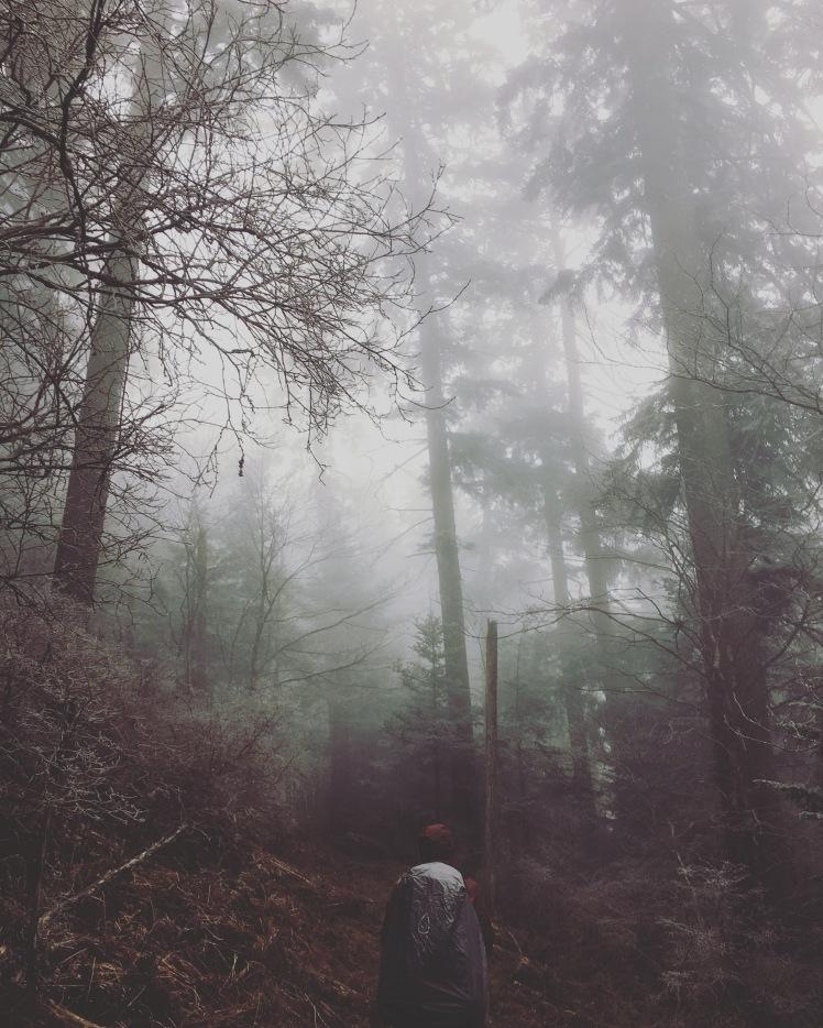 Balsam Mountain Trail - Hangman