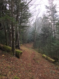 Balsam Mountain Trail