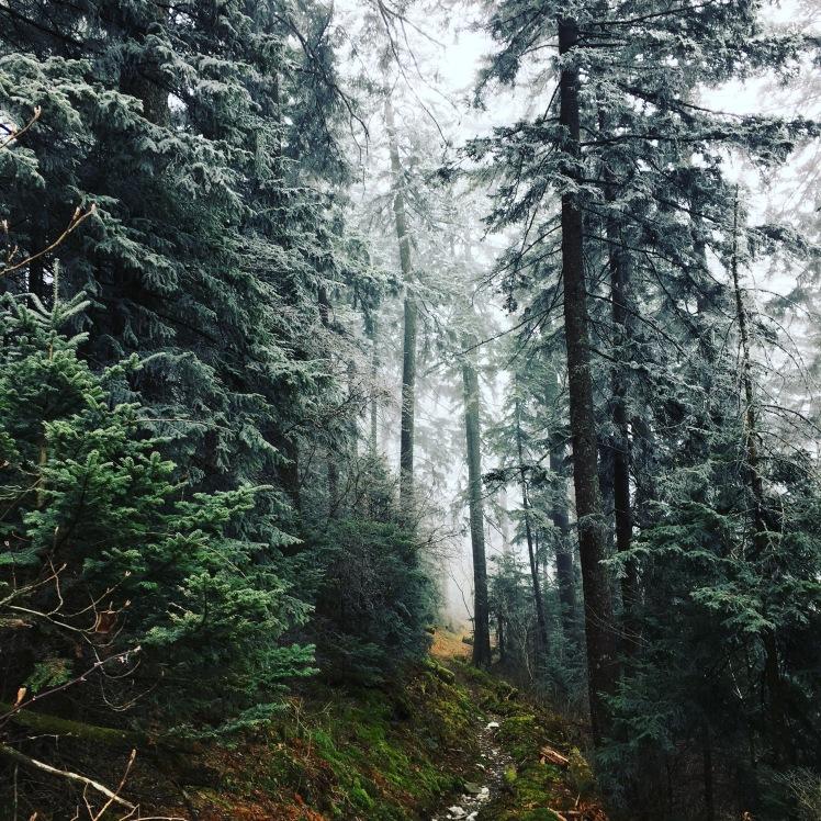 Balsam Mountain Trail