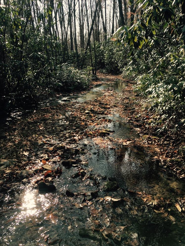 Cooper Creek Trail