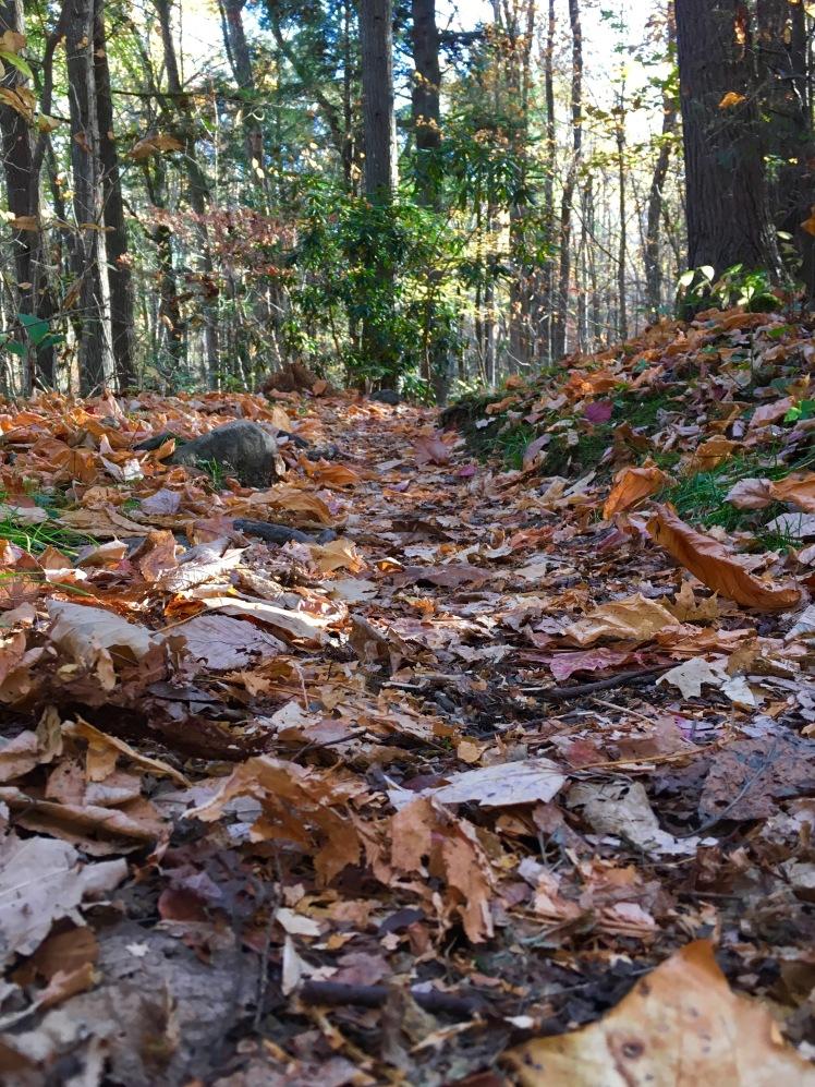 Low Gap Trail