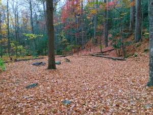 Lower Mount Cammerer Trail- Campsite 35