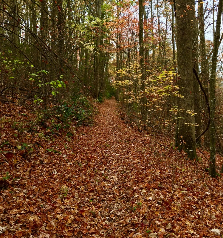 Lower Mount Cammerer Trail