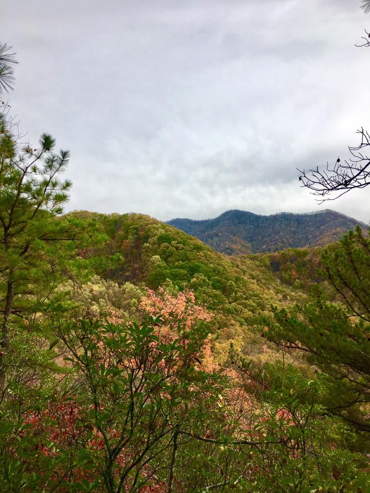 Lower Mount Cammerer Trail - Sutton Ridge Overlook