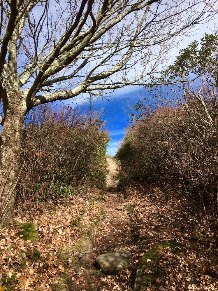 Mount Cammerer Trail