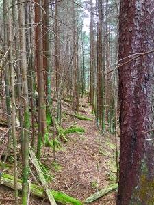 old Hyatt Ridge Trail