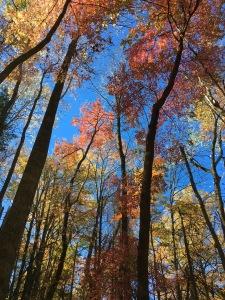 Snake Den Ridge Trail