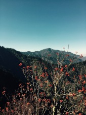 view of Mt. LeConte from Charlie's Bunion