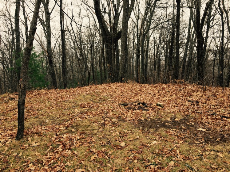Barnett Branch Trail - campsite