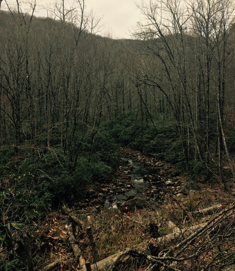Daniel Ridge Loop Trail - Davidson River