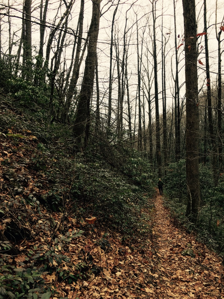 Farlow Gap Trail - Johnny