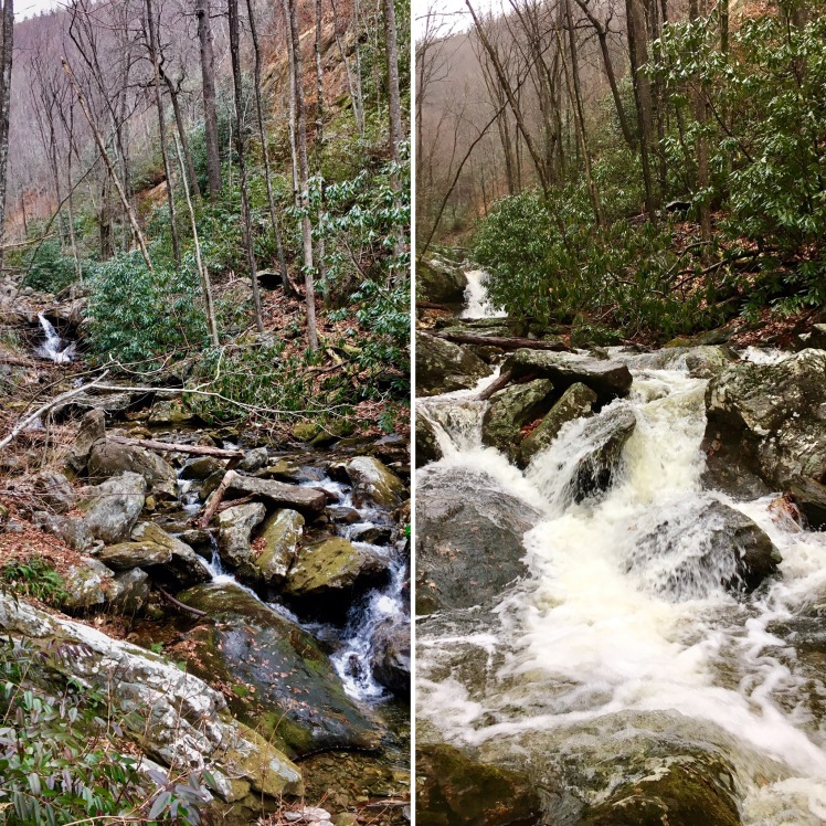 Farlow Gap Trail - Shuck Ridge Creek - Saturday vs. Sunday