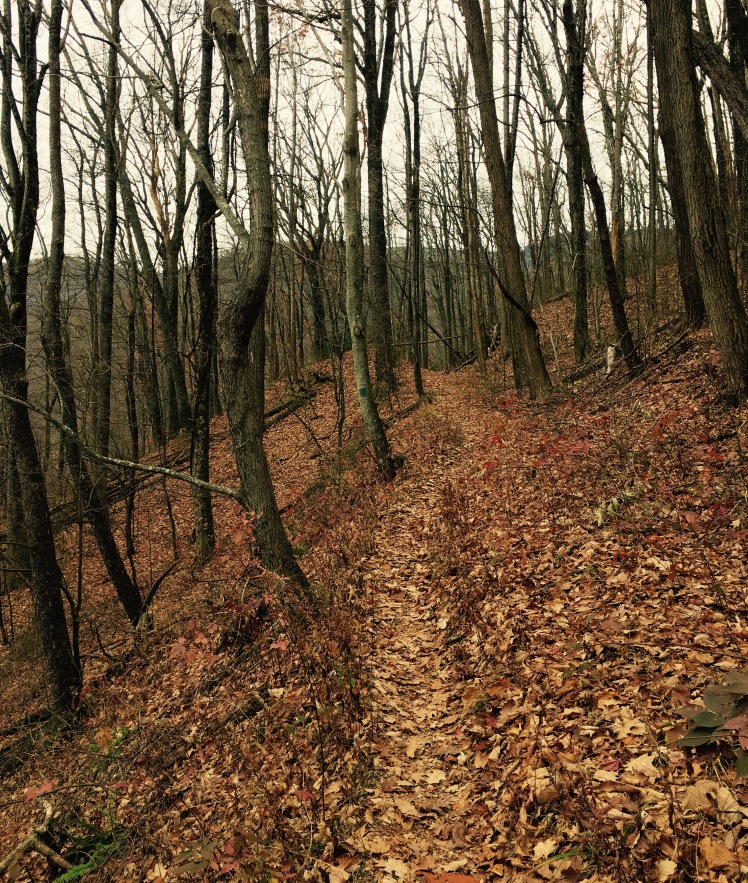 Farlow Gap Trail