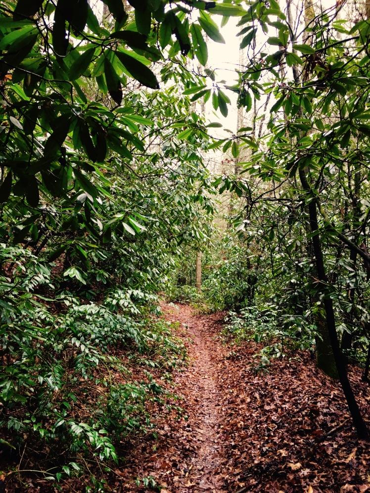 Bear Branch Trail