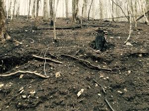 Beech Creek Trail - fire damage
