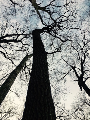 Chestnut Cove Trail - tree