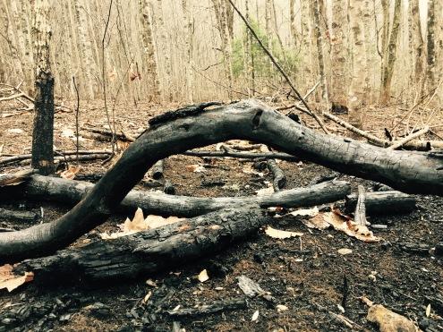 Deep Gap Trail - fire damage