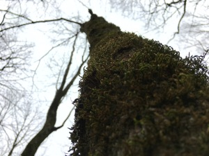 moss and trees