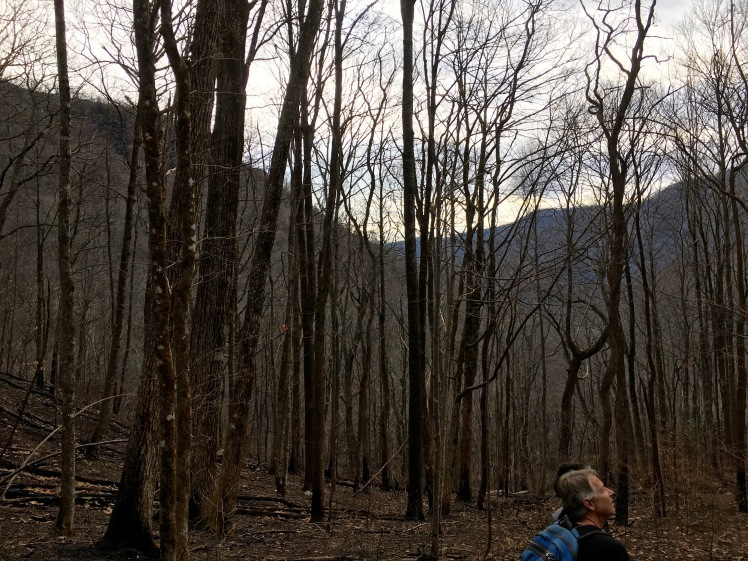 Southern Nantahala Wilderness - Brent