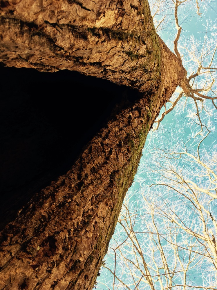 Porter's Creek Trail - Tony