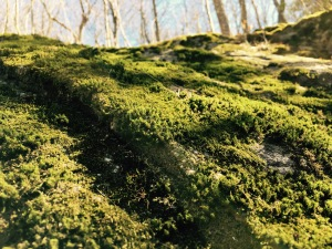 Spencer Gap Trail
