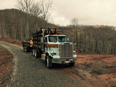 F.S. 5050 - logging at trailhead