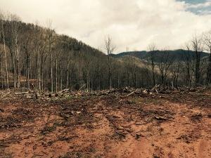 F.S. 5050 - logging