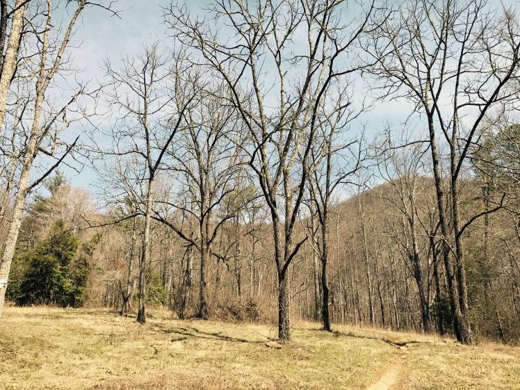 Fletcher Creek Trail