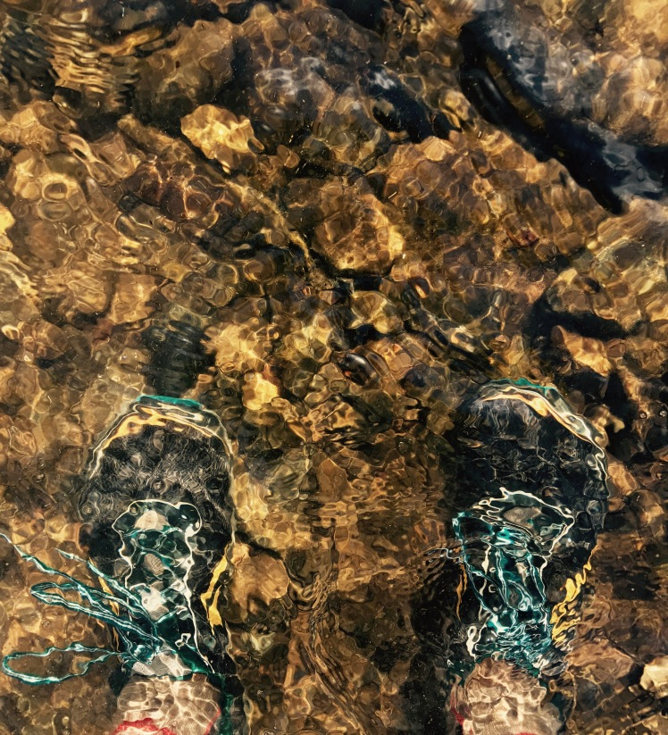 North Mills River Trail - Altra Lone Peak 2.5