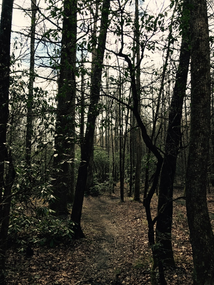 North Mills River Trail - forest