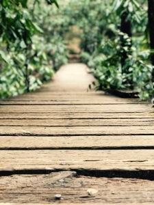 North Mills River Trail - swinging bridge