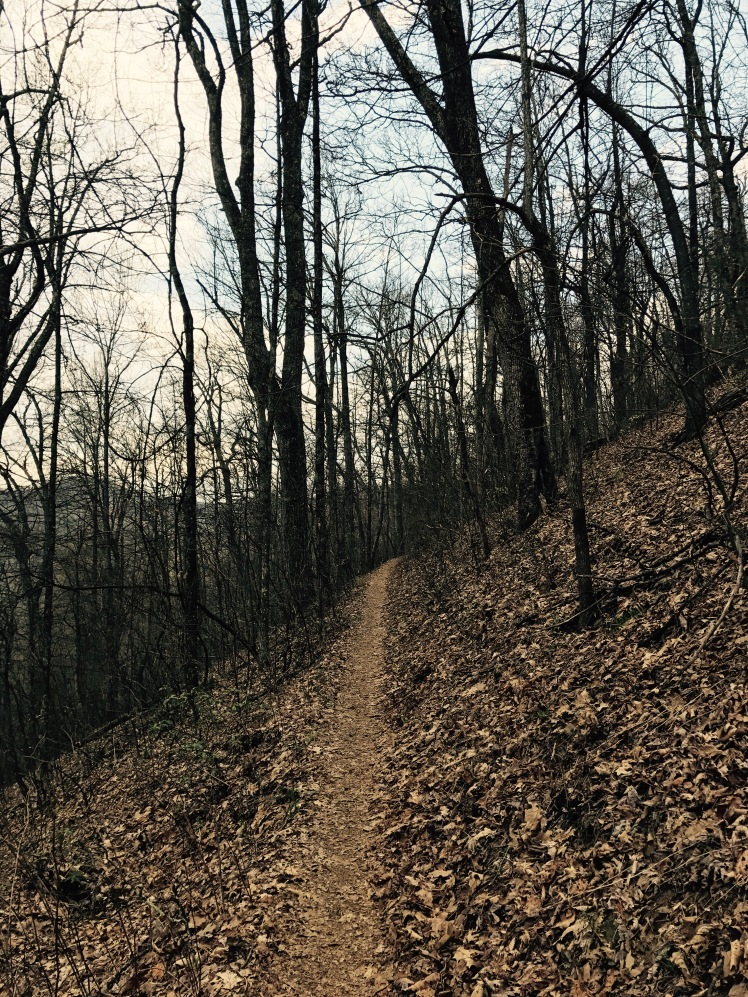 Laurel Mountain Trail