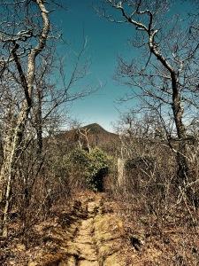 Pilot Rock Trail - view of Mount Pisgah