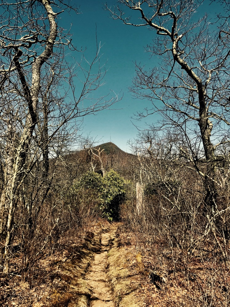 Pilot Rock Trail - view of Mount Pisgah