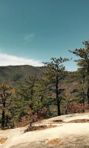 Slate Rock - pine trees