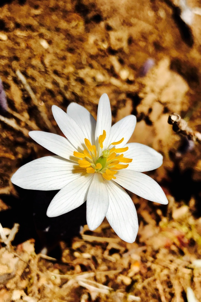 Thompson Creek Trail - flower